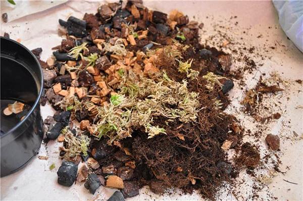 Грнут для орхидеи должен содержать торф, кору, мох, древесный уголь и золу