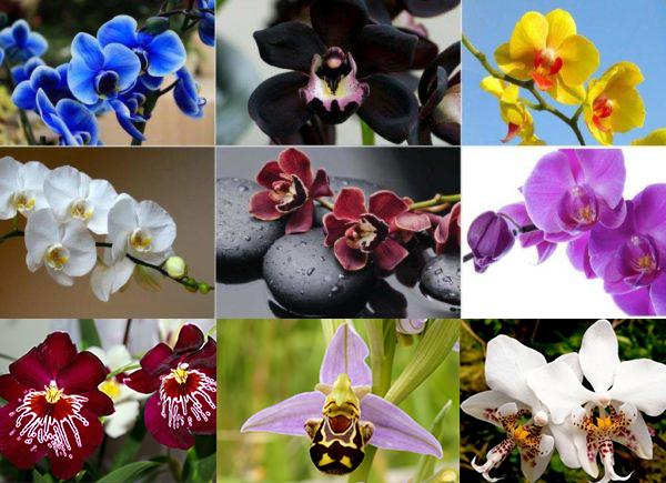 Для орхидей характерна уникальная окраска и форма лепестков
