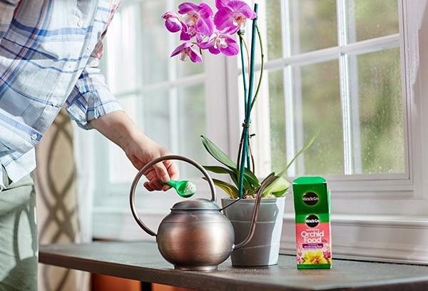 Регулярно подкармливайте орхидею в соответствии с рекомендациями