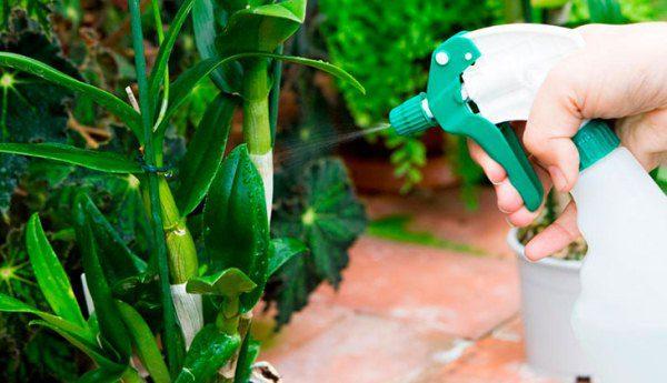 Для дендробиума важен уровень влажности воздуха