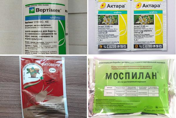 Препараты для химической борьбы с мучнистым червецом