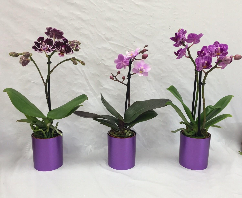 Как реанимировать орхидею, если сгнили корни: как спасти (оживить) орхидею в домашних условиях