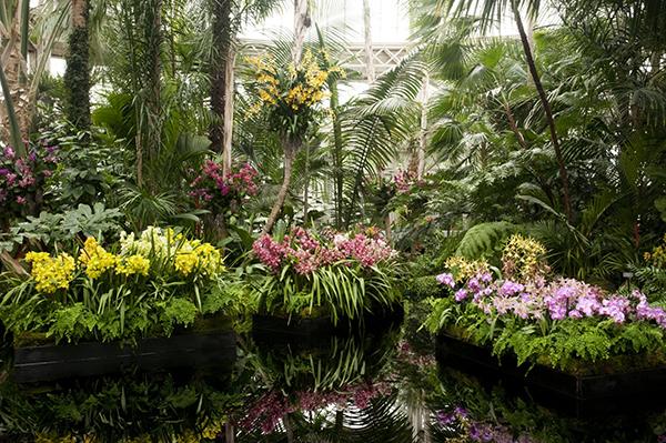 Орхидеи в природе размножаются быстрее