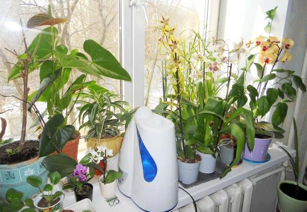 Сухой воздух может стать причиной опадания цветов