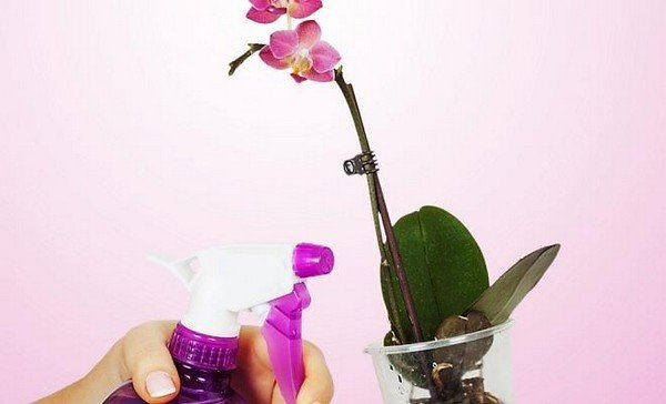 После очистки листьев необходимо их обработать масляным или мыльным раствором