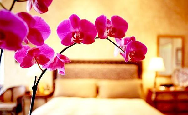 Орхидею не рекомендуют ставить в спальне