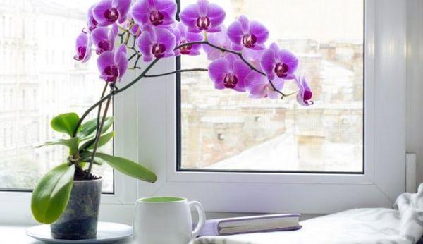 После покупки орхидею необходимо определить в карантин