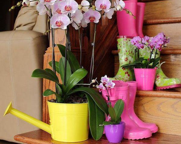 Орхидею поливают редко