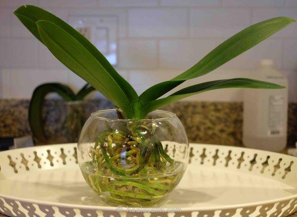 Орхидея любит мягкую воду