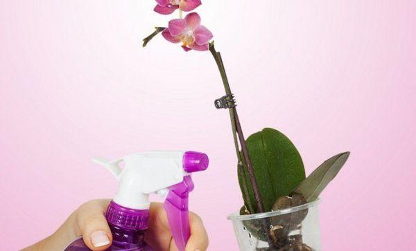 Корневое опрыскивание растения