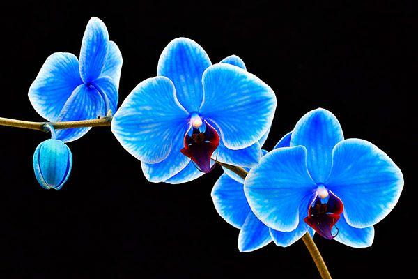 Как покрасить орхидею в домашних условиях