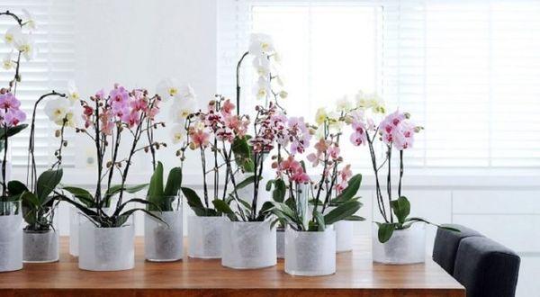 Орхидеи рекомендуется удобрять органикой