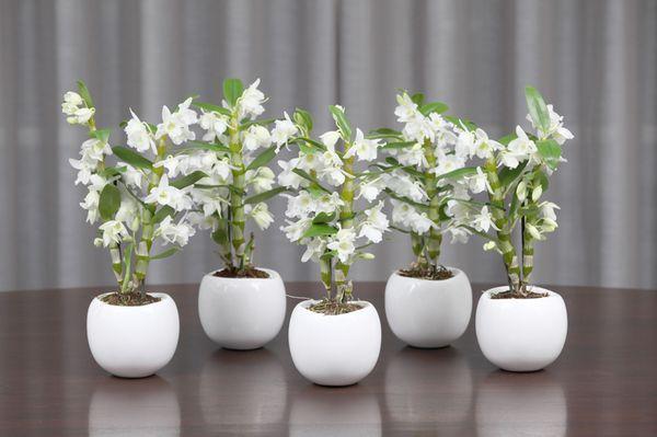 Орхидее нужно правильное освещение