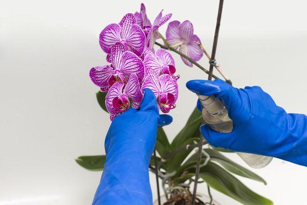 Удобрение орхидей на гидропонике