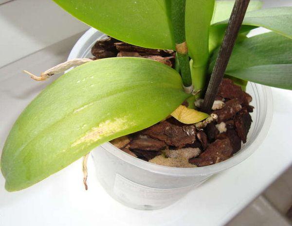 От качества грунта зависит здоровье растения