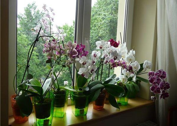 Орхидея любит влажный воздух