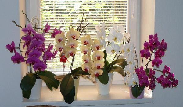 Уход за купленной орхидеей
