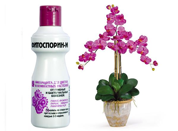 Для орхидей предусмотрен фитоспорин в форме жидкости