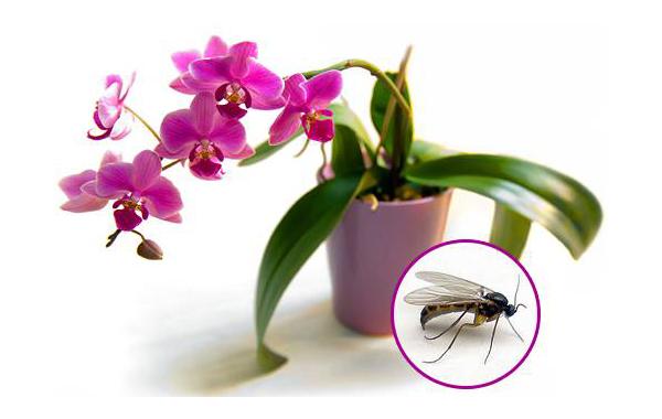 Белые червячки в орхидее