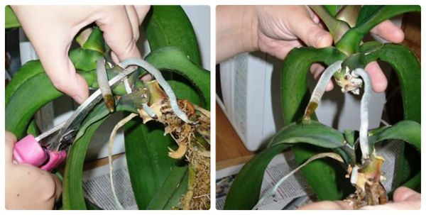 Вегетативный способ размножения