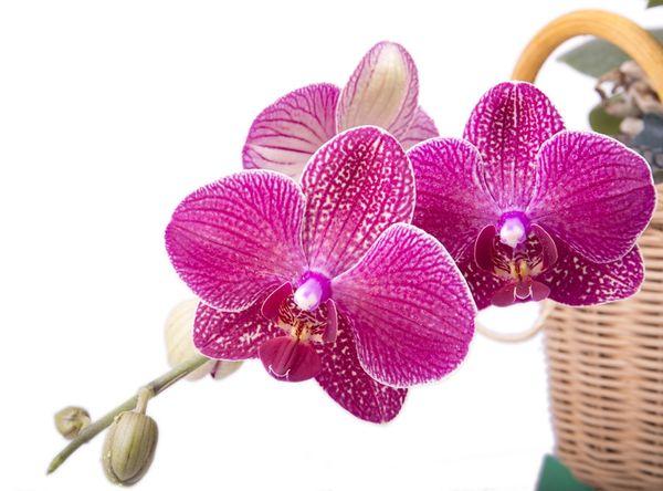 Орхидеи бывают светолюбивые и тенелюбивые