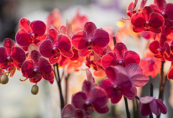 Тенелюбивые орхидеи довольствуются светом 5,000–15,000 лк